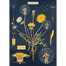 Cavallini & Co. Dandelion Chart Decorative Paper Sheet