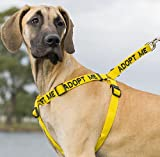 """ADOPT ME"" Yellow Color Coded Non-pull Dog Harness (New Home Needed) Donate To Your Local Charity!, My Pet Supplies"