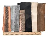 Snake Skin Snakeskin Pieces; Grab Bag! Assorted Colors, 72 inches