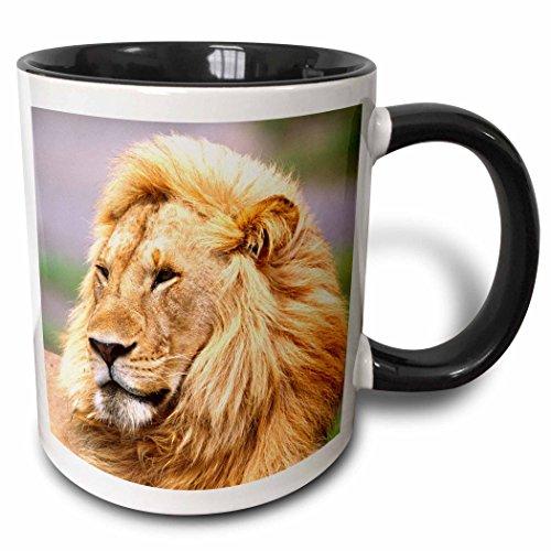 3dRose (mug_83907_4) Male African Lion, Tanzania Africa - NA02 DNO0332 - David Northcott - Two Tone Black Mug, 11oz