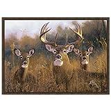 "Custom Printed Rugs CR Wildlife Rug – Buck Stops Here Nylon 37""x52"" For Sale"