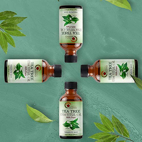 100% Pure Tea Tree Oil Natural Essential Oil with Antifungal Antibacterial Benefits For Face Skin Hair Nails Heal Acne Psoriasis Dandruff Piercings Cuts Bug Bites Multipurpose Surface Cleaner by Maple Holistics (Image #2)
