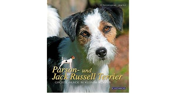 Hunde TerrierGroße Jack Russell In Kleinem Und Parson FcJK1Tl