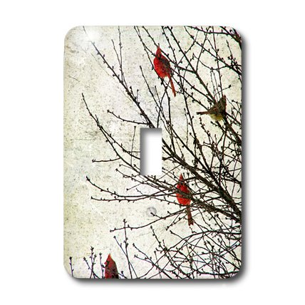 3dRose LLC lsp_12387_1 Cardinals Photographed By Angel and Spot Single Toggle Switch
