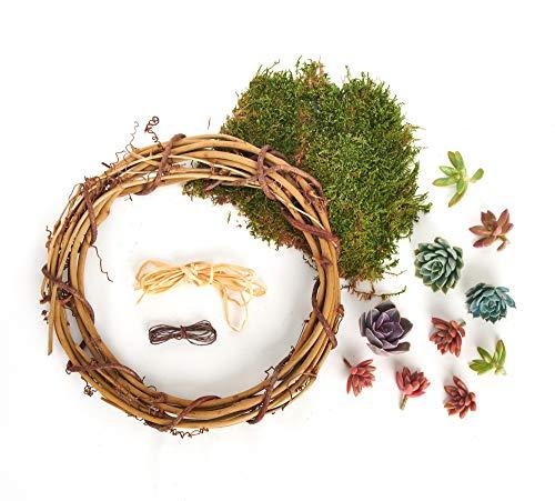 - Shop Succulents | Unique Wreath Kit Succulent Cuttings, DIY, Hand Selected, Ideal for Home Décor or Wedding Events, 12