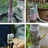 Teekini Honana HG-GT4 100m Flower Vegetable Grafting Tape Garden Degradable Plants Seedling Tools