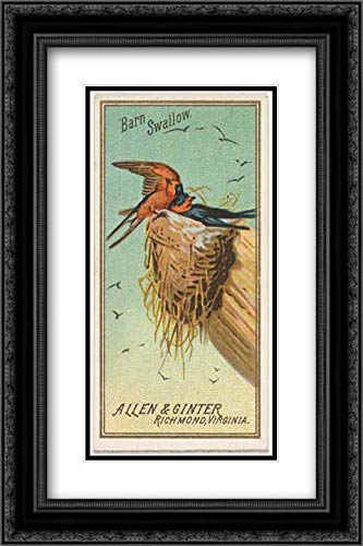 Allen & Ginter 2X Matted 16x24 Black Ornate Framed Museum Art Print - Barn Swallow, from The Birds of America Series (N4) for Allen & Ginter Cigarettes Brands