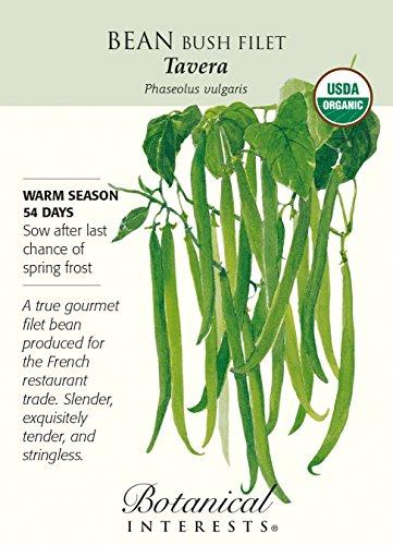 Tavera Bush Bean Seeds - 15 g - Certified Organic