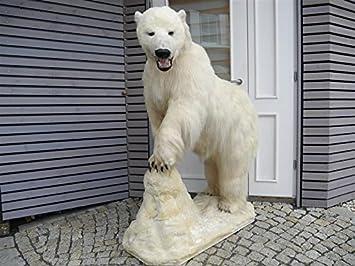 Outdoor Küche Genehmigung : Gtk geweihe & trophäen krumholz eisbär ganzpräparat polarbär mit