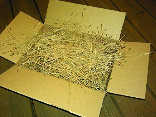 NewLifeEcycling Premium fresh harvested Pine Needle Mulch (Colorado Ponderosa) 6quarts