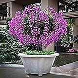 12 Seeds Purple Orchid Ornamental Flower Tree