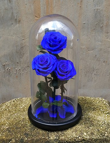 Preserved Rose Never Withered Roses Flower in Glass Dome, Gift for Valentine's Day Anniversary Birthday (Blue 2) by Smequeen