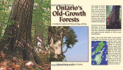 ontarios-old-growth-forests