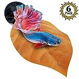 #10: SunGrow Betta Bed Kit Non-plastic, BPA-Free Hammock - Natural, Organic, Comfortable Rest Area Fish Aquarium - Improves health Simulating Betta's Natural Habitat