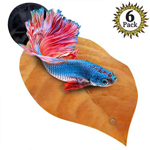t Non-plastic, BPA-Free Hammock - Natural, Organic, Comfortable Rest Area Fish Aquarium - Improves health Simulating Betta's Natural Habitat ()