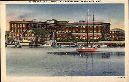 Marine Pond (Marine Biological Laboratory from Eel Pond Woods Hole, Massachusetts Original Vintage Postcard)