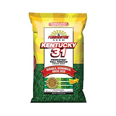 Pennington 100509303 Kentucky 31-Inch Tall Fescue Seed, 25-Pound : Grass Plants : Garden & Outdoor