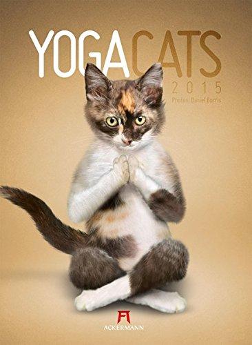 Yoga Cats 2015
