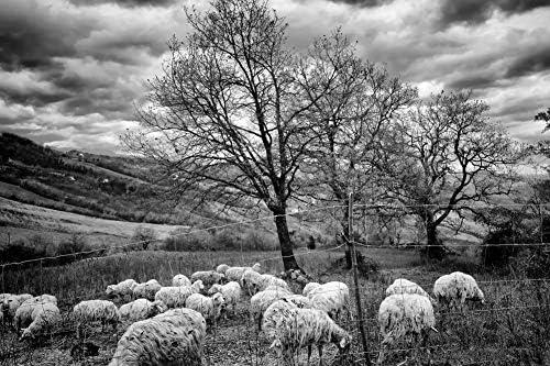 フェンスの後ろの羊の壁紙-自然の壁紙-#48262 - 白黒の キャンバス ステッカー 印刷 壁紙ポスター はがせるシール式 写真 特大 絵画 壁飾り 90cmx60cm