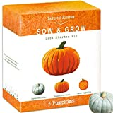 buy Nature's Blossom Pumpkin Kit - Grow 3 Pumpkins from Seed now, new 2019-2018 bestseller, review and Photo, best price $24.99