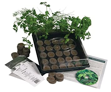 Amazon.com : Living Whole Foods K5-1 Indoor Culinary Herb Garden ...