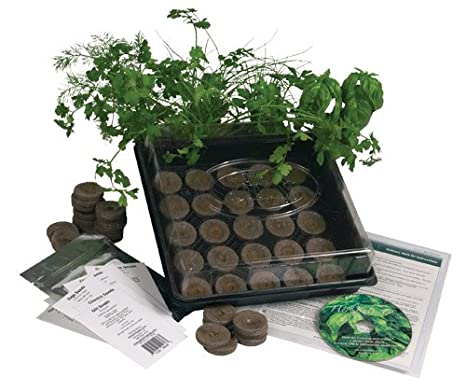 Amazon.com : Living Whole Foods K5-1 Indoor Culinary Herb Garden ...