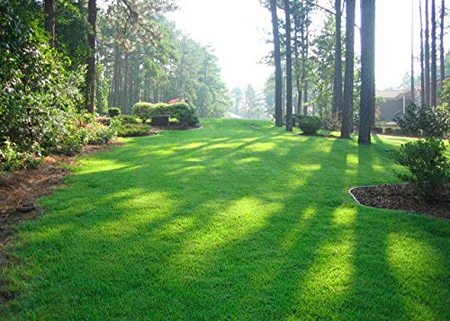 Zenith Zoysia Grass Seed 100% Pure 1/2 Lb. (Plants - 500 Sq.ft.) by  (Image #1)