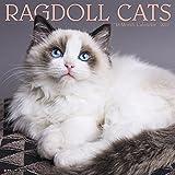Ragdoll Cats 2019 Wall Calendar