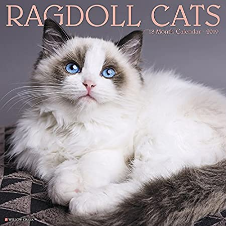 Ragdoll Cats 2019 Wall Calendar Willow Creek Press 1549202170 Calendars NON-CLASSIFIABLE