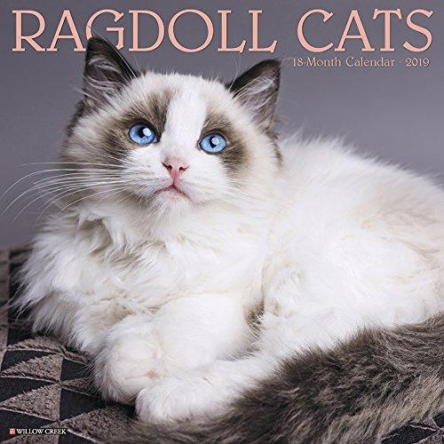 Ragdoll Cats 2019 Calendar