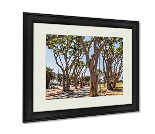 Ashley Framed Prints, Coral Trees Lining A Street At Embarcadero Park South In San Diego California, Wall Art Decor Giclee Photo Print In Black Wood Frame, Ready to hang, 16x20 - The Promenade Coral Springs
