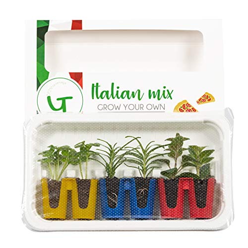 Seville Farms Italian Mix The The Gardians Grow Your Own & Eat Herbs - Basil, Oregano, Rosemary, 6 Pack, Green