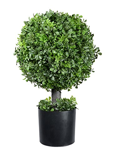Pre-Potted 22 Inches High Ball Shaped Boxwood Topiary- 14 Inch Diameter - Plastic Pot ()