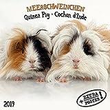 Meerschweinchen - Guinea Pig - Cochon d Inde 2019 Artwork Edition