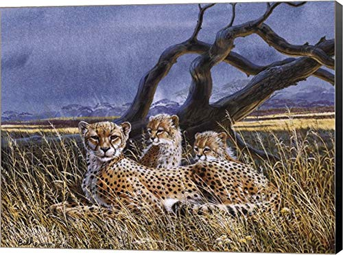 - Cheetah and Cubs by Don Balke Canvas Art Wall Picture, Museum Wrapped with Black Sides, 16 x 12 inches