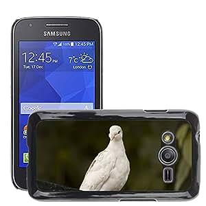 Etui Housse Coque de Protection Cover Rigide pour // M00135726 Paloma Pájaro Mosca de la paloma // Samsung Galaxy Ace4 / Galaxy Ace 4 LTE / SM-G313F