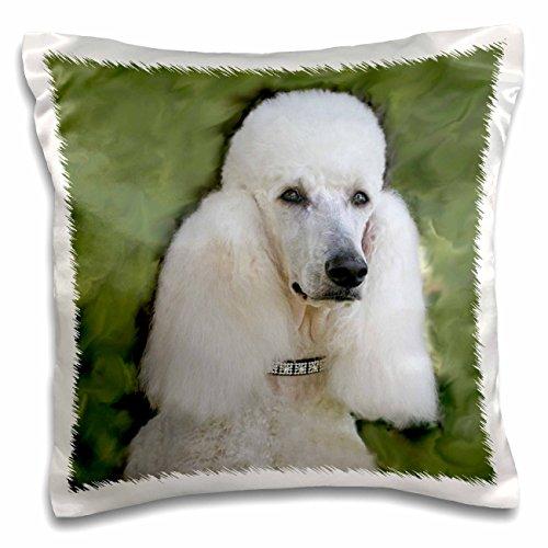 - 3dRose Standard Poodle-Pillow Case, 16-inch (pc_1298_1)