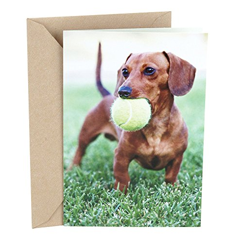 Hallmark Shoebox Funny Birthday Greeting Card For Him Dachshund