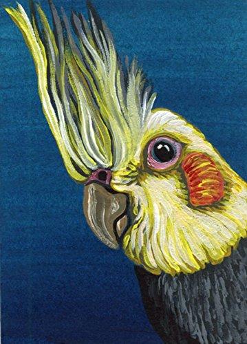 Aceo Bird - ACEO ATC Cockatiel Pet Bird Art Original-Carla Smale