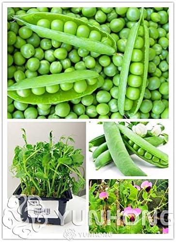 Pinkdose 10 Unids Guisantes Verdes Bonsai Alfa Rusa Vegetal ...
