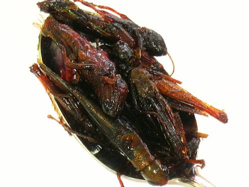 Locusts kanroni 150g locust locusts tsukudani