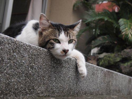 (japan  back street cats beppu onsen (Japanese Edition))