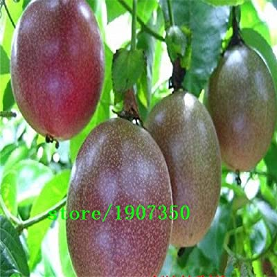 Garden Supplies 100 Pcs Exotic Passion Fruit Seeds Purple Passiflora edulis Passion Flower