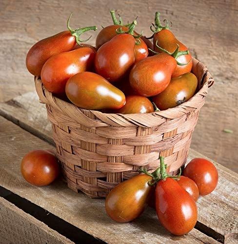 David's Garden Seeds Tomato Cherry Chocolate Pear SL3688 (Red) 25 Non-GMO, Open Pollinated Seeds