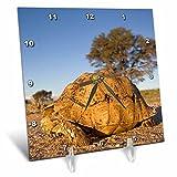 3dRose dc_75879_1 South Africa, Leopard Tortoise, Kalahari Desert-Af42 Pso0222-Paul Souders-Desk Clock, 6 by 6-Inch
