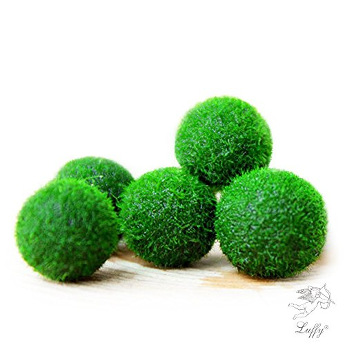 Tree Ball Moss (Luffy Marimo Moss Ball Plants, Bright Green  (Pack of 6))
