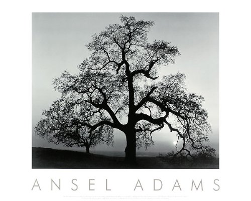 Oak Tree, Sunset City, California, 1932 Art Poster Print by Ansel Adams, (Overall Size: 30x24) (Image Size: 22.5x18.5)