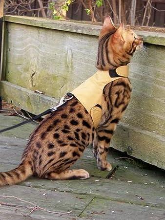 Bengal cat harness uk