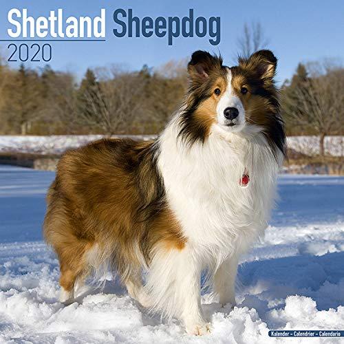 Shetland Sheepdog Calendar - Dog Breed Calendars - 2019 - 2020 Wall Calendars - 16 Month by Avonside (Multilingual Edition)