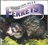 Ferrets (Weird Pets)